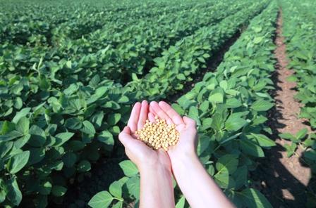 Precios-de-los-granos-bajan-y-preocupa-al-agro