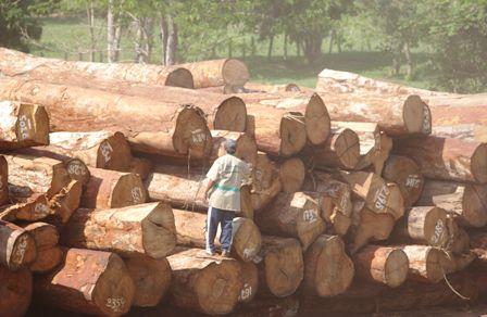 Enfrentamientos-por-la-madera