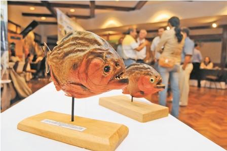 La-galeria--de-los-peces