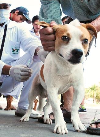 Intensifican-campana-de-vacunacion-canina