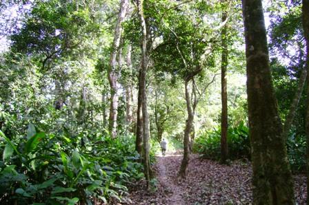 Proponen-titulos-para-los-bosques-
