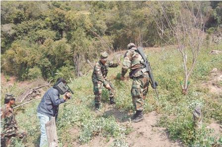 Trafican-semillas-de-marihuana-en-Bolivia