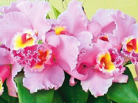 Concepcion,-el-paraiso-de-las-flores