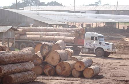 Sector-forestal-registra-baja-en-exportaciones