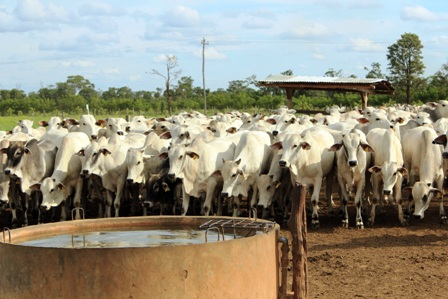 Produccion-de-carne-sube-un-3-por-ciento-este-ano