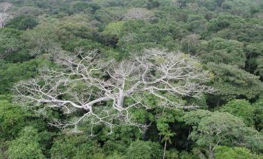 -El-Satelite-que-China-y-Brasil-lanzan-manana-mejorara-vigilancia-de-Amazonia