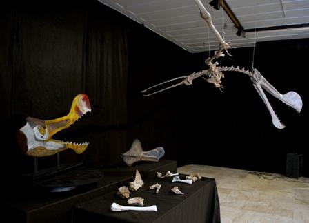 Presentan-en-Rio-de-Janeiro-esqueleto-de-reptil-volador-gigante