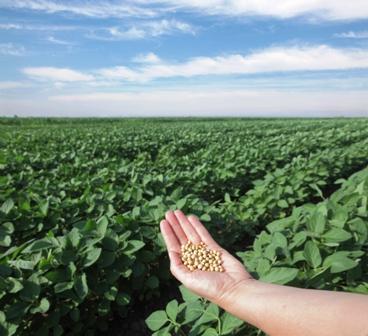 Piden-libre-exportacion-de-soya-y-maiz