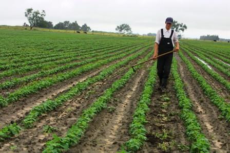 El-autoconsumo-copa-la-agricultura-familiar