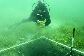 Una-extrana-criatura-en-el-fondo-del-mar-es-capturada-en-video-