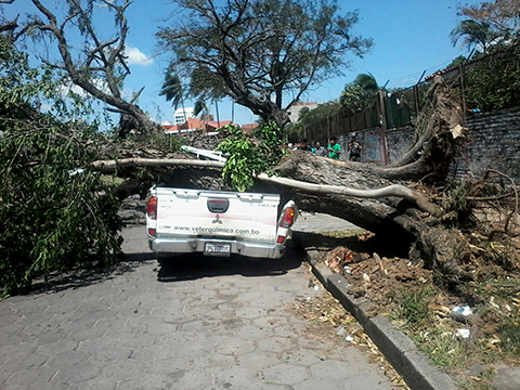 Fuertes-vientos-provocan-danos-por-caidas-de-arboles