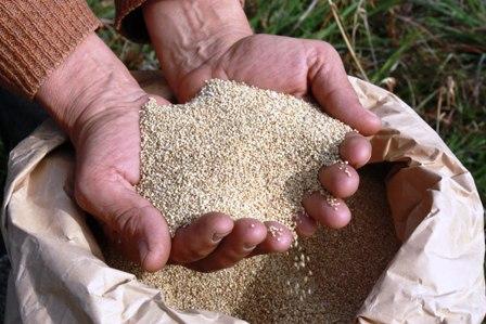 Productores-bolivianos--de-quinua-en-feria-de-EEUU