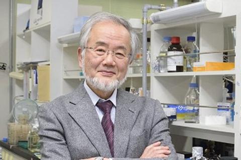 Premio-Nobel-de-Medicina-para-un-japones-que-descubrio-la-autofagia
