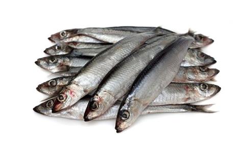 Cambios-ambientales-reducen-tamano-de-anchoas-y-sardinas-en-el-Mediterraneo