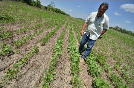 Áreas-de-cultivo-de-4-granos-disminuyen-en-invierno