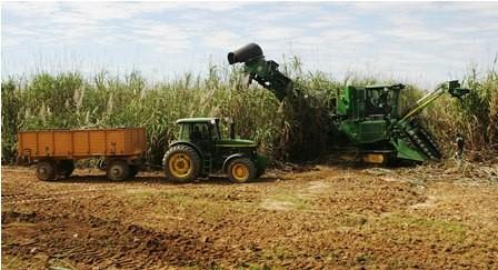 Preven-llegar-a-8-millones-de-quintales-de-azucar