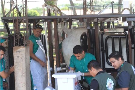 Concretan-exportacion-de-genetica-bovina