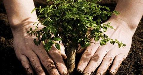 Bolivia-celebra-el-Dia-Nacional-del-Árbol-y-reafirma-lucha-contra-el-calentamiento-global