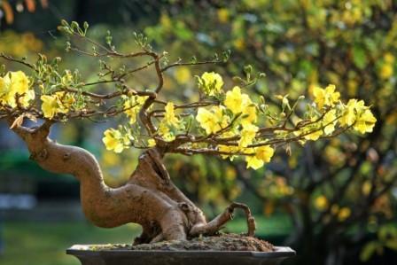 Variedad-en-festival-del-bonsai