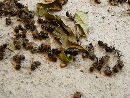 En-Alemania-la-biomasa-de-insectos-ha-reducido-un-75%