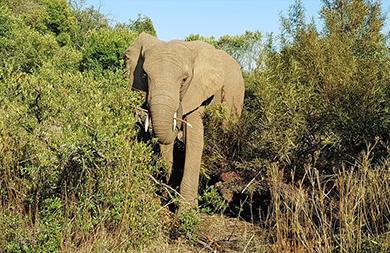 Elefante-mata-a-un-hombre-que-intento-fotografiarlo