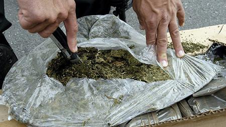 Incautan-12.720-kilos-de-marihuana