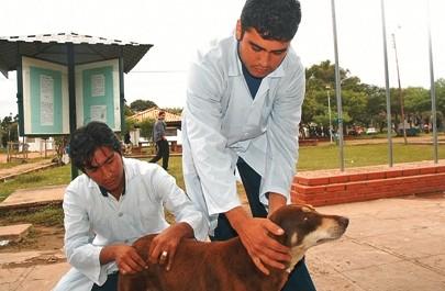 Bolivia-registra-76-casos-de-rabia-canina-en-lo-que-va-del-ano