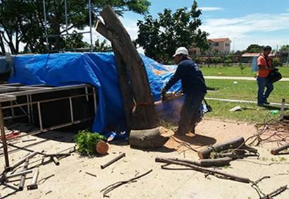 Talan-un-arbol-en-sitio-donde-se-instala-una-tarima-en-el-Cambodromo