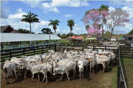 Ven-a-China-como-potencial-comprador-de-carne-bovina