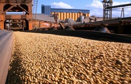 Autorizan-exportacion-de-300-mil-tn-de-soya