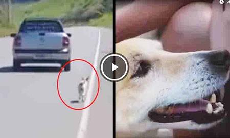 Familia-que-intento-abandonar-a-su-perro-es-detenida-por-sus-vecinos