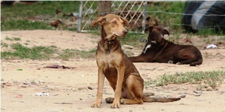 La-OMS-pide-no-aplicar-politica-de-captura-y-adopcion-de-canes-