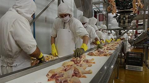Newcastle-frena-exportacion-de-carne-de-pollo-en-Bolivia