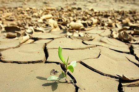 El-cambio-climatico-afectara-a-cultivos-como-el-trigo,-arroz-y-maiz