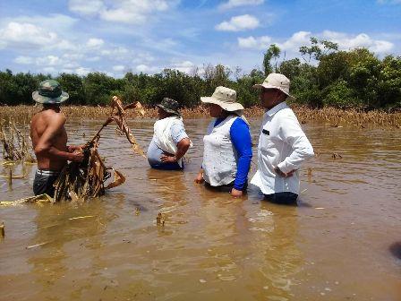 Productores-pierden-24-mil-hectareas-de-soya