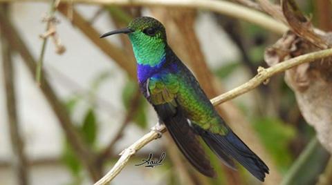 Bolivia-logra-el-cuarto-puesto-en-el-mundial-de-avistamiento-de-aves
