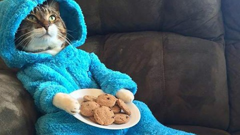 Embajada-de-EEUU-se-disculpa-por-enviar-una-invitacion-falsa-con-un-gato-en-pijama