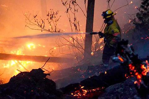 Incendio-en-Sucre-arrasa-15-hectareas-de-arboles-de-eucalipto-y-pino-en-ocho-horas