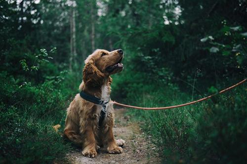 Tu-perro-entiende-mejor-lo-que-dices-de-lo-que-crees,-segun-este-estudio