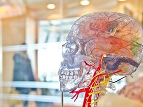 Miles-de-bacterias-intestinales-viven-en-nuestro-cerebro,-segun-un-estudio