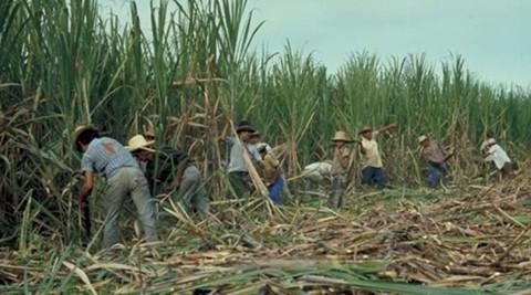 Advierten-sobre-los-impactos-negativos-por-la-produccion-de-etanol