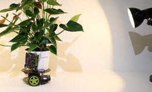 Crean-una-planta-robot-capaz-de-desplazarse-en-busca-de-luz-
