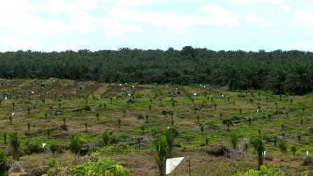 Crisis-del-sector-forestal-genera-solicitudes-de-revocatoria-de-PGM-y-crece-frontera-agricola