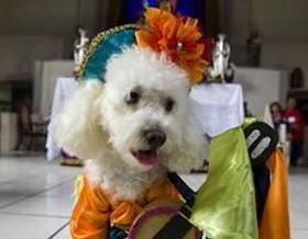 En-Nicaragua-los-perros-peregrinan-y-piden-a-San-Lazaro-por-su-salud