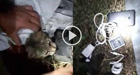 Capturan-a-un-gato-que-intento-ingresar-un-celular-a-una-carcel-de-Costa-Rica