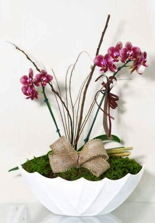 Orquideas-la-flor--reina-