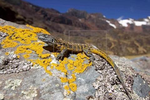 En-Bolivia-esta-la-mayor-biodiversidad-del-mundo