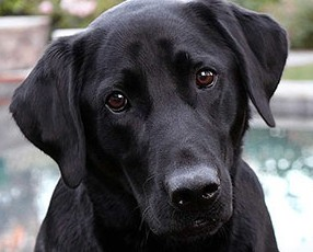 Aldeanos-rescatan-a-un-perro-que-era-estrangulado-por-una-boa