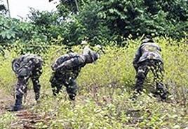Operativo-de-erradicacion-de-coca-en-La-Asunta-deja-2-heridos-y-11-detenidos