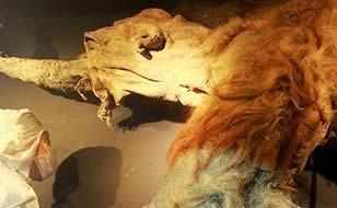 Los-mamuts-correran--en-10-anos--por-un--Parque-Jurasico--ruso